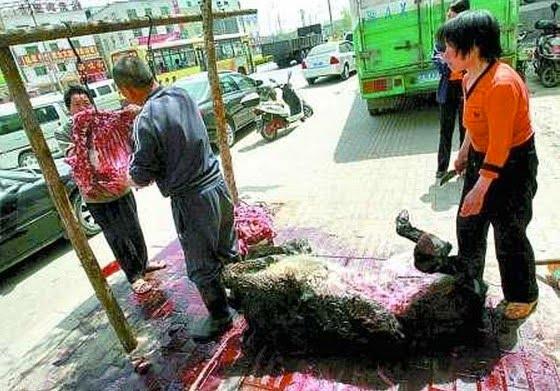 abusi sugli asini
